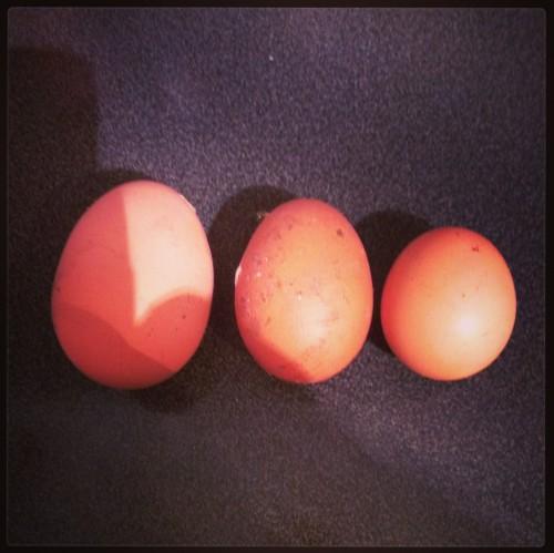 The bonus of different sized eggs.  Barbara, Margot, Jerry